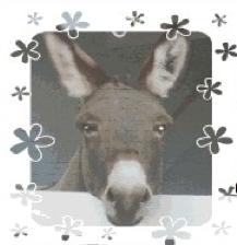 RoseBud, the rescue burro
